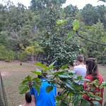 Guests photographing a wallaby in the garden