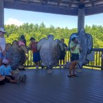 The sea turtle educational session is under a large open shelter overlooking the sea turtle pool