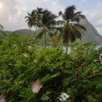 Photo de Hummingbird Beach Resort