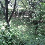 Photo of Takato Castle Remains Park