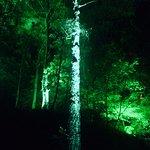 Foto de Faskally Wood