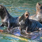Sea Lions are entertaining.