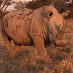 Photo of Khama Rhino Sanctuary