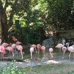 Foto de Los Angeles Zoo & Botanical Gardens