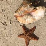 Photo de SeaGarden Beach Resort