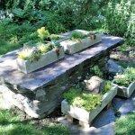 Garden scene