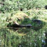 Tranquil Pond Garden