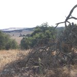 Santa Rosa Plateau Ecological Reserve
