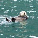 So Many Sea Otters