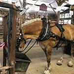 Photo de Palmetto Carriage Works