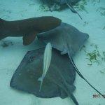 sharks and stingrays