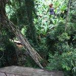 Foto di Flight of the Gibbon