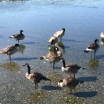 Photo of Birds of a Feather Ocean Lagoon Bed & Breakfast & Vacation Rental