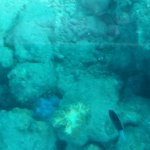 Green Island Cruise - Day Tour (Big Cat Green Island Reef Cruise) Foto