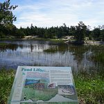 Ponds along the trail also have signage. Nice nature walk.