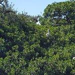 Bird Island sanctuary