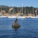 Californian Sea Lion posing