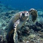Photo de Baliku Dive Resort (Amed Bali Diving)