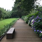 7月に入り、山百合が咲き始めました。紫陽花、蓮の花はそろそろ盛りを過ぎます。