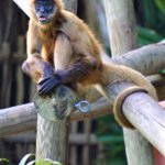 Monkeys, Monkeys & more