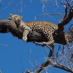 andBeyond Nxabega Okavango Tented Camp Foto