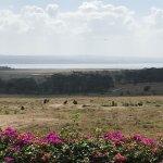 Estas son algunas de las vistas desde el Lake Nakuru Lodge.