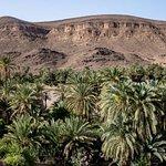 Vue panoramique depuis l'auberge sur l'oasis