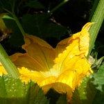 Tucked away foliage