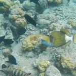 Snorkelling pics