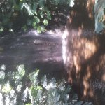 Foto de La Concepcion Jardin Botanico Historico de Malaga