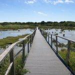 Boardwalk across marshes