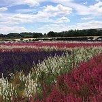 The Real Flower Petal Confetti Company's Confetti Flower Field