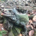 Photo of Parc des Mamelles, le Zoo de Guadeloupe