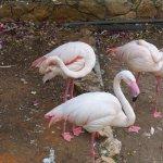 Photo of Haifa Educational Zoo