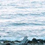 Photo de Lanai at the Cove