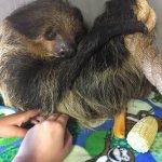 Sloth encounter at the zoo