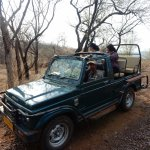 Ranthambore - Safari