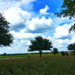 Photo de Wildseed Farms