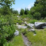 another trail, narrow and rocky