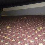 poo under bed