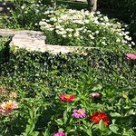 Photo of Chicago Botanic Garden