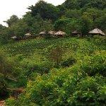山區的茶園
