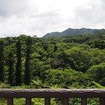 Photo of Forest Yanbaru Subtropical