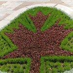 Maple Leaf Artistry