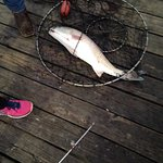 Kind stranger helped my daughter get it in the net and up on dock