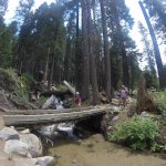 "Another ""Hobbit""-like creek crossing, returning back down the trail to Lodgepole."