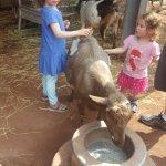 goat petting
