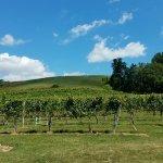 Foto de Veritas Vineyard & Winery