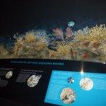 Foto di St. Lucie County Aquarium - Smithsonian Marine Ecosystems Exhibit