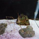 St Lucie County Aquarium
